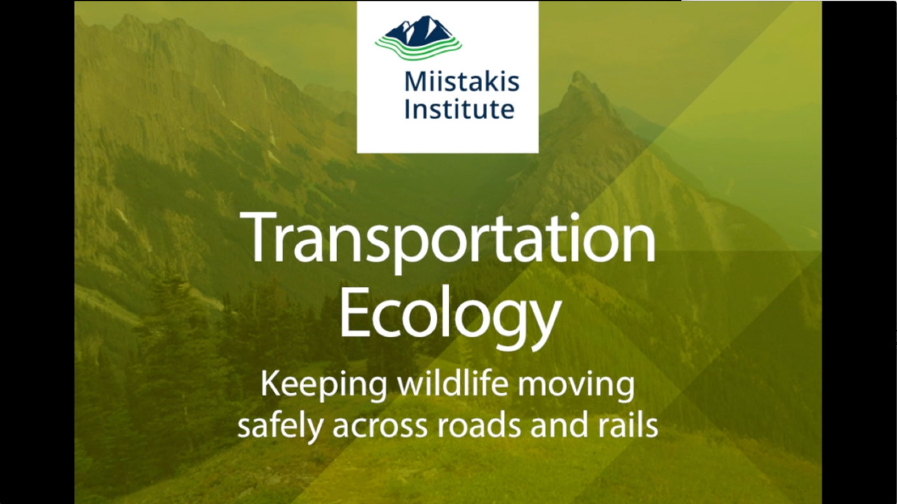 Transportation Ecology